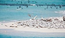 Free Terns And Pelicans Stock Photo - 14384120