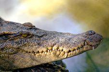 Free Crocodile Stock Photo - 14385610