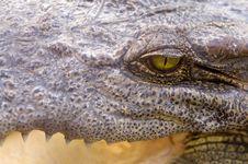 Free Crocodile Eye Stock Photography - 14385792