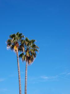 Free Exotic Scenery - Palms Royalty Free Stock Photo - 14386525