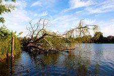 Free Tree On Water Stock Photo - 14386800