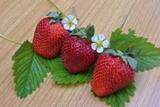 Free Ripe Strawberries Royalty Free Stock Images - 14387489