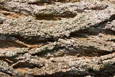 Free Bark Of A Tree A Background Stock Image - 14387591