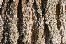 Free Bark Of A Tree A Background Royalty Free Stock Image - 14387626