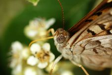 Free Butterfly Close Up Royalty Free Stock Images - 14388309