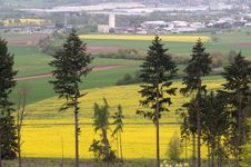 Outskirts Of Town And Canola Fields. Stock Images