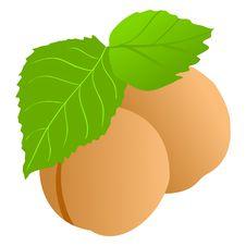 Free Apricot Royalty Free Stock Photo - 14388875
