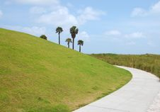 Free Palm Trees Behind Green Hill Stock Photos - 14389353