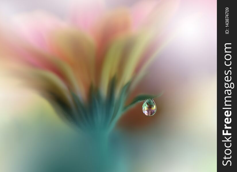 Beautiful Nature Background.Abstract Artistic Wallpaper.Art Photography.Spring Flowers.Water drop.Plant,pure.Orange,yellow.Ecology