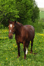 Free Grazing Horse Stock Photo - 14393310