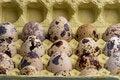 Free Quail Eggs Royalty Free Stock Photo - 14394345