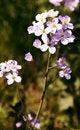Free Field Flower Stock Image - 14398521