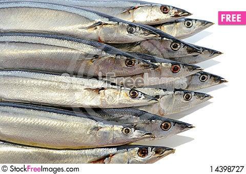 Several marine fish Stock Photo