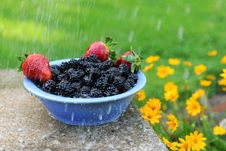 Free Blackberries And Strawberries In A Bowl Stock Image - 14391371