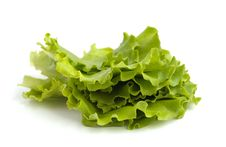 Free Salad Leaves Royalty Free Stock Image - 14391626