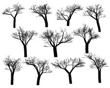 Free Silhouettes Of Trees Stock Images - 14392264