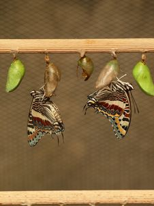 Free Butterfly Stock Photography - 14392472