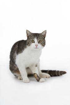 Free Cat. Stock Photography - 14393502