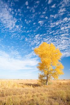 Free Background With Yellow Tree Stock Image - 14393971