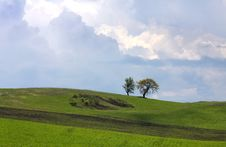 Free Trees In The Field Royalty Free Stock Photos - 14394288