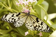 Free Butterfly Sitting On A Flower Royalty Free Stock Photography - 14394377
