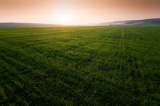 Free Green Field With Perfect Grass Stock Images - 14394424