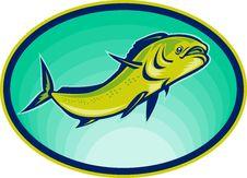 Free Dolphin Fish Or Mahi Mahi Royalty Free Stock Photos - 14394688