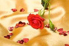 Red Roses On Golden Satin Stock Photo