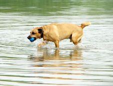 Free Dog Stock Photo - 14398710