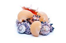 Big Macaroni And Seashells Stock Image