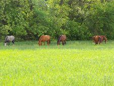Free Horse Graze Stock Photography - 14399082