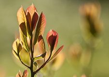 Free New Spring Leaves Stock Images - 14399954
