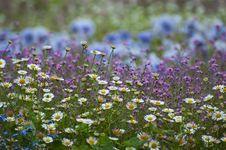 Free Flowers Stock Photos - 14399993