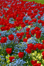 Free Tulip Patterns Stock Photo - 1447870