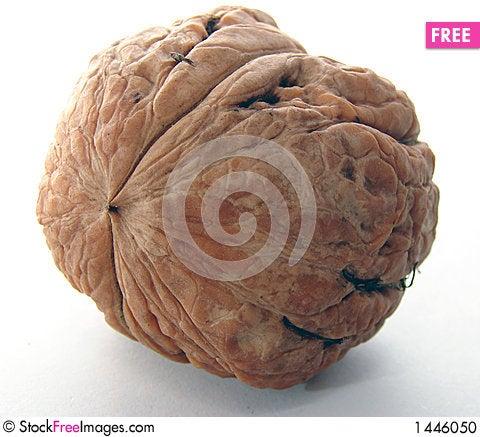 Free Walnut Stock Photo - 1446050