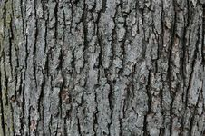 Free Tree Trunk With Texture Royalty Free Stock Photography - 1440087