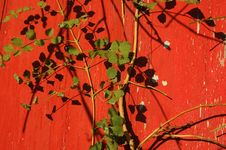 Free Old Red Wall Royalty Free Stock Photo - 1440785