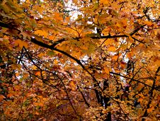 Free Colorful Leaves Royalty Free Stock Image - 1441736