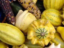 Free Zucchini Stock Images - 1443534