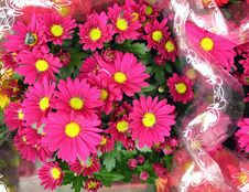 Free Pink Chrysanthemums In Cellophane Paper Stock Photography - 1443712