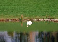 Free Swan On Lake Royalty Free Stock Image - 1444176