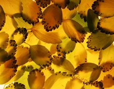 Free Backlit Leaves Stock Photos - 1447593