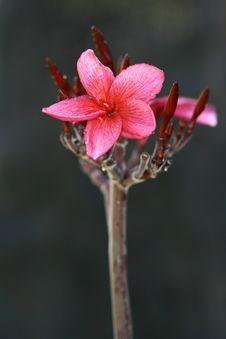 Free Flower Stock Image - 1447831