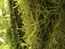 Moss Growing On Tree Trunk Stock Photo