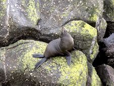 Free Seal Waiting Stock Photos - 1449493