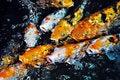 Free Koi Fish Royalty Free Stock Image - 14402866