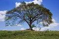 Free Big Tree Stock Image - 14403891