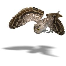 Free Little Owl Bird. 3D Rendering With Clipping Path Stock Photography - 14400052