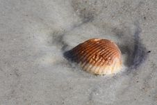 Free Seashell In Sand Royalty Free Stock Images - 14400369