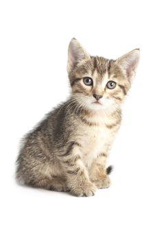 Little Striped Kitten Stock Photography
